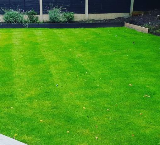 Lawn Care with Fertiliser