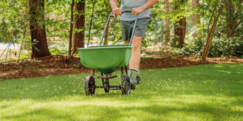 How & when to overseed a lawn