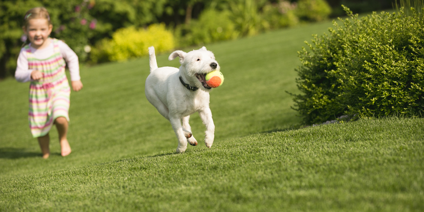Is Lawn Feed Safe for Pets