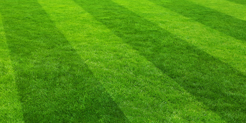 How to care for new lawn - mowing feeding watering copy